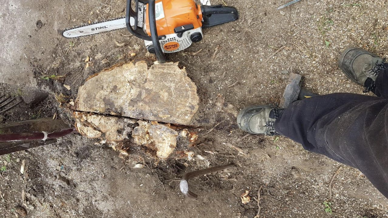 grinding out a stump using a chainsaw